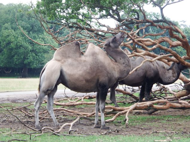 Knuthenborg_Safaripark_3